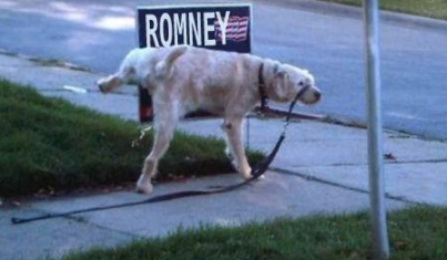 Dog Wars : Farmer vs Bird - Page 3 Romney-dog-pissing-on-sign-via-thirdwaymattb-on-twitter