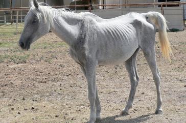 Starving Horse oregonlive.com