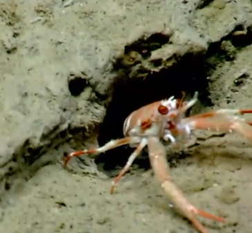 Deep Sea live feed via noaa.gov
