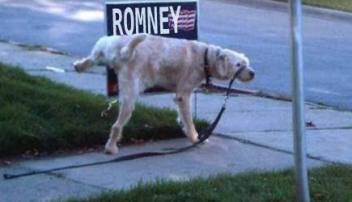 Romney Dog Peeing via thirdWayMattB on twitter