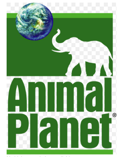 Animal Planet via Wikipedia