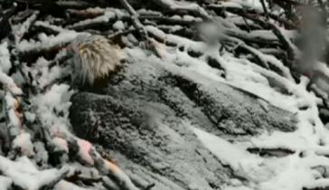 Eagle Cam via Webcams.dnr.state.mn.us