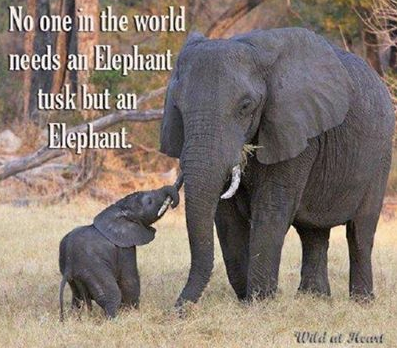 Via Elephants Without Borders on facebook