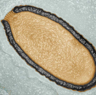 Giant Virus Alive After 30,000 years via Discover Magazine