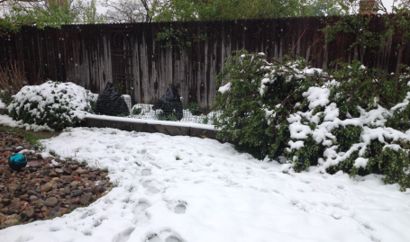 Back Bed after snow 5-11-14