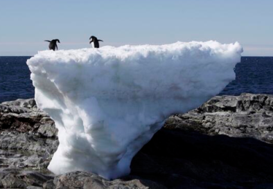 Stranded Penguins reuters