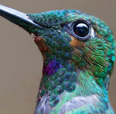 Hummingbird via Learn Something on Twitter