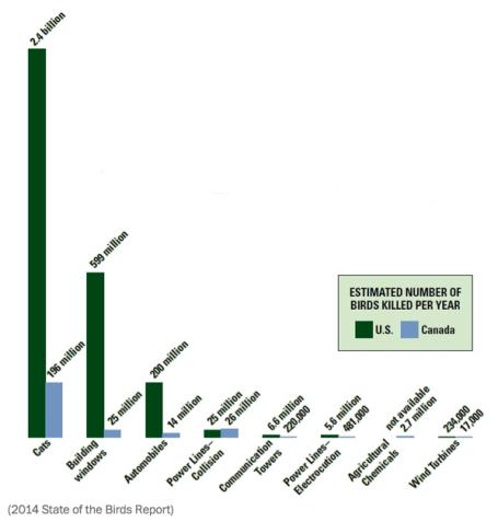 Birds Killed in US Per Year via Washingtonpost.com