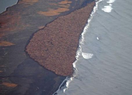 Image NOAA via SFGate.com)
