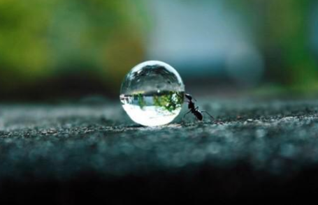 Ant Pushing a water droplet via enthicingpics