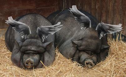 Flying Pigs via Durova via Wikipedia